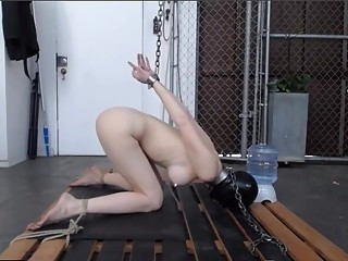 Slave Greyhound receives a Huge Enema